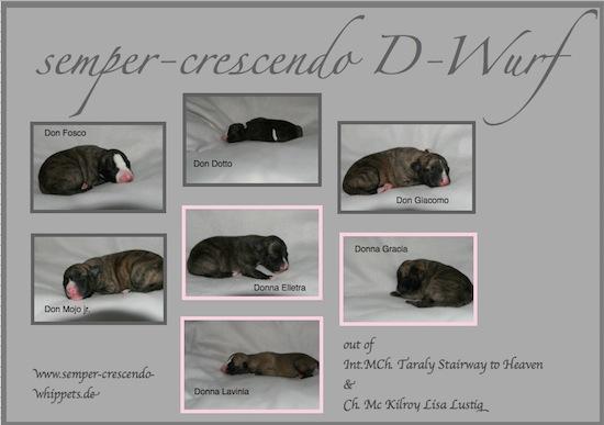 d-wurf_1-small.jpg