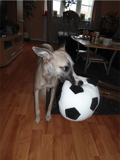 fusball-fieber-small.JPG