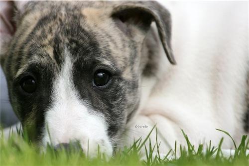 puppies_14_06_2012_8-small.jpg