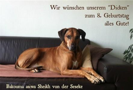 Sheikh_geb_8-small