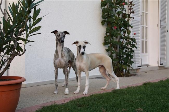 Dino&Gianni-small